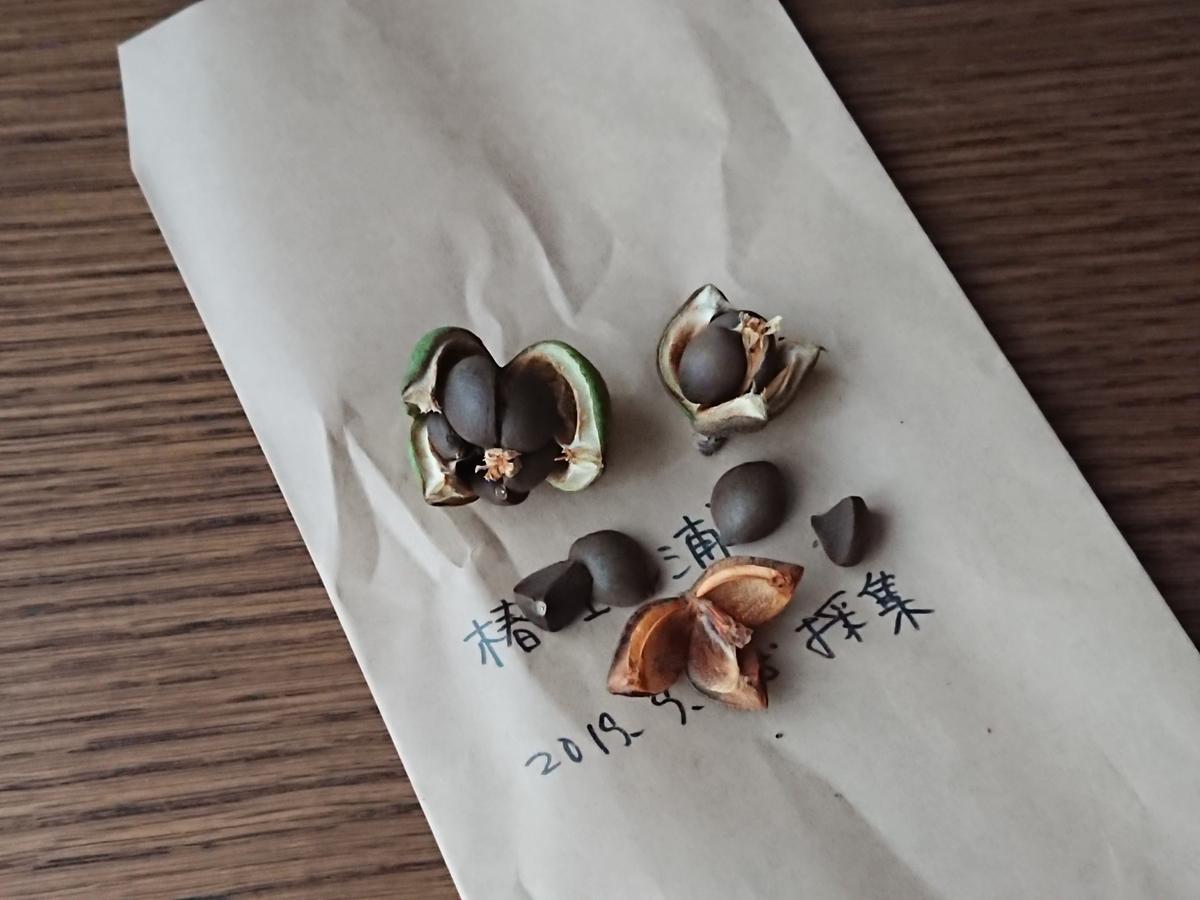 f:id:toukaen-bonsai:20191009141536j:plain