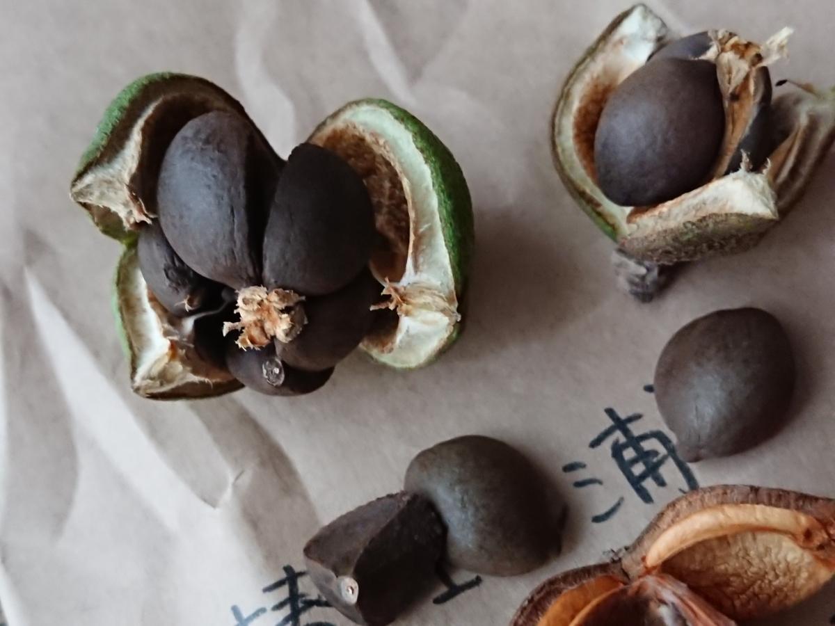 f:id:toukaen-bonsai:20191009141612j:plain
