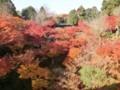 ご存知東福寺の紅葉♪