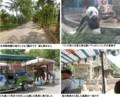 天津動物園パンダと五大道の馬車