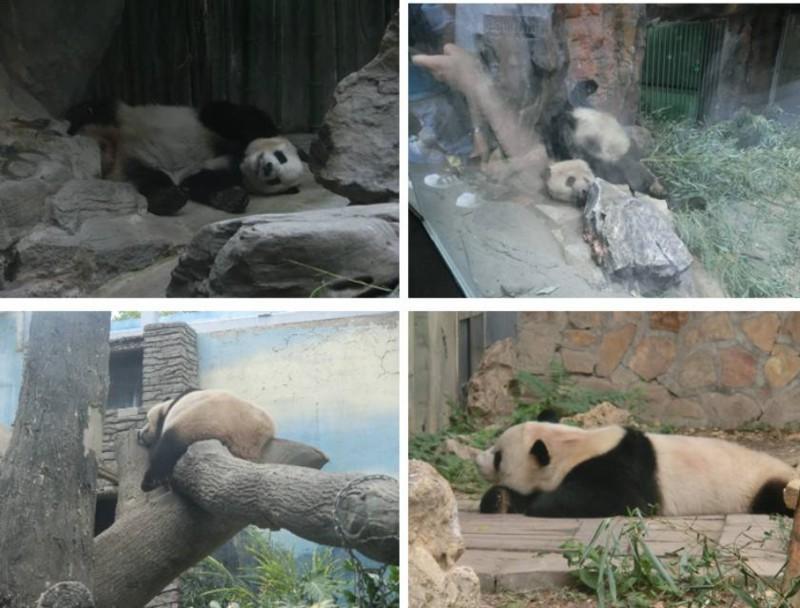 寝てばかりパンダ1〜4号