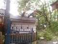 隣接建物屋根直撃の倒木