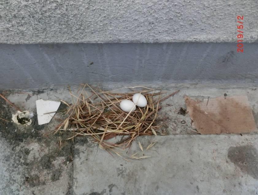 これがその巣と卵☆