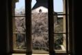 [京都][桜][植物]京都新聞写真コンテスト 京都府庁
