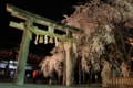 [京都][桜][植物]京都新聞写真コンテスト 大石神社