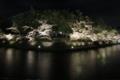 [京都][桜][植物]京都新聞写真コンテスト 岡崎周辺