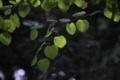 [京都][府立植物園]は~と