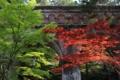 [京都][植物][建築]水路閣(南禅寺)