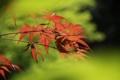 [京都][植物]植物園