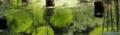 [京都][植物]京都新聞写真コンテスト 水鏡
