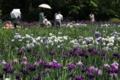[京都][植物]京都新聞写真コンテスト はなしょうぶ園