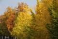 [京都][植物]京都新聞写真コンテスト 秋のストーリー