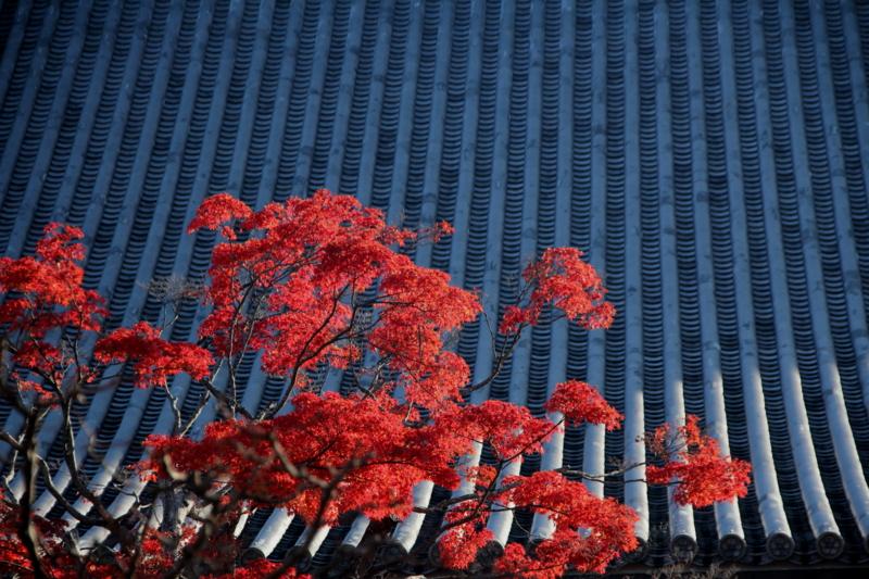 京都新聞写真コンテスト 智積院にて