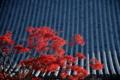 [京都][建築]京都新聞写真コンテスト 智積院にて