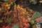 京都新聞写真コンテスト 水面の紅葉