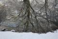 [京都][府立植物園][雪]京都新聞写真コンテスト 水鏡