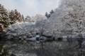 [京都][府立植物園][雪]京都新聞写真コンテスト 雪景色