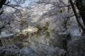 [京都][府立植物園][雪]京都新聞写真コンテスト 冬化粧