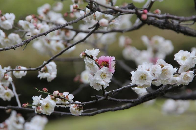 京都新聞写真コンテスト 紅一点