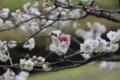 [京都][植物]京都新聞写真コンテスト 紅一点
