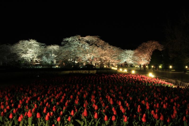 京都新聞写真コンテスト ビッグウェーブ