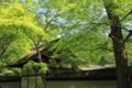 [京都][植物]