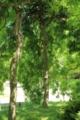 [京都][府立植物園][植物]京都新聞写真コンテスト 緑のカーテン