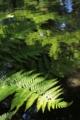[京都][府立植物園][植物]京都新聞写真コンテスト 日の当たる場所へ