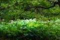 [京都][府立植物園][植物]京都新聞写真コンテスト 森の妖精