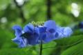 [京都][府立植物園][植物]京都新聞写真コンテスト 青いスクリュー