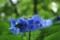 京都新聞写真コンテスト 青いスクリュー