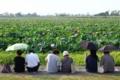 [滋賀][植物]京都新聞写真コンテスト 湖畔のひととき