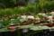 京都新聞写真コンテスト 水上の妖精