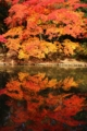 [京都][紅葉]京都新聞写真コンテスト '14年紅葉