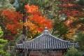 [京都][紅葉][神社仏閣]京都新聞写真コンテスト '14年紅葉