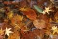 [京都][紅葉]京都新聞写真コンテスト autumn 色