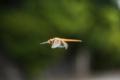 京都新聞写真コンテスト 空中遊泳
