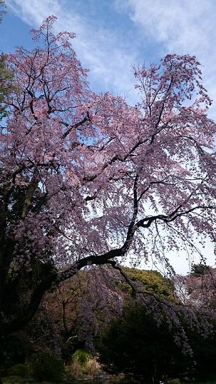 f:id:tourabu-purei-nikki:20170404232606j:plain