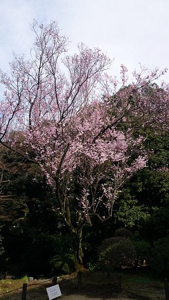 f:id:tourabu-purei-nikki:20170404232643j:plain