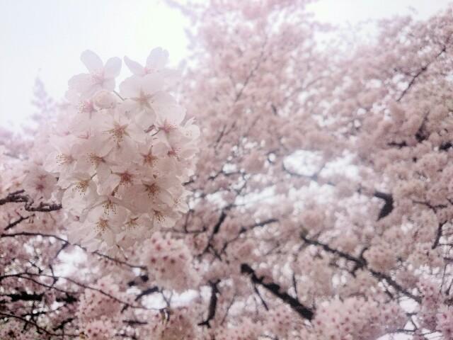 f:id:toutsuki:20190408205138j:image