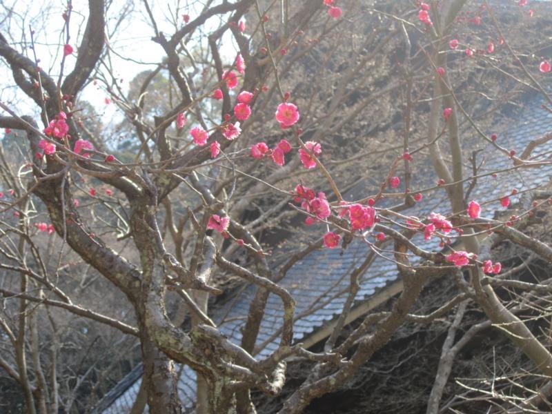 f:id:towakamakura:20120217110947j:image:w360