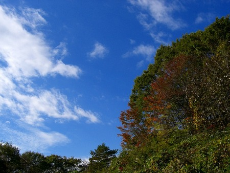 f:id:toxandoria:20071103213537j:image