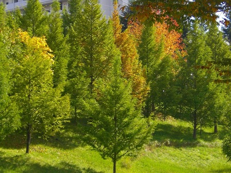 f:id:toxandoria:20071103215114j:image