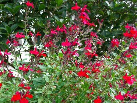 f:id:toxandoria:20071108061030j:image