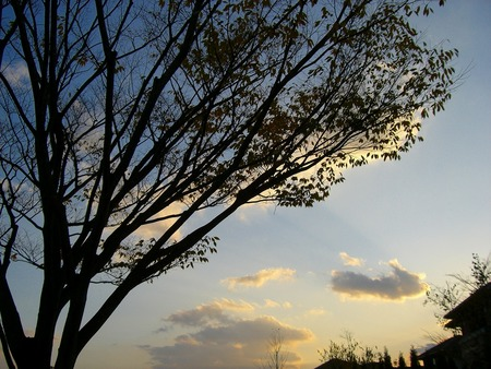 f:id:toxandoria:20071108063418j:image