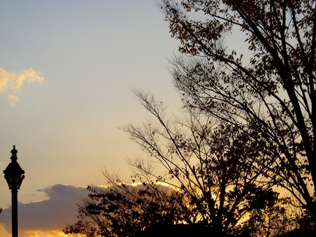 f:id:toxandoria:20071108063459j:image