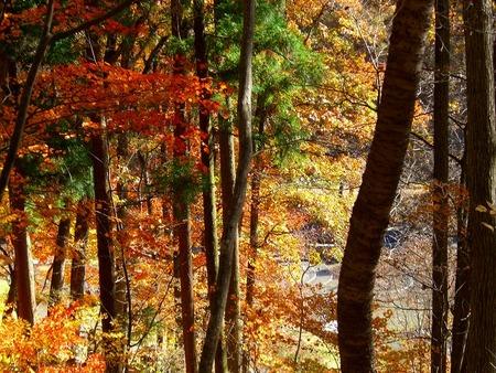 f:id:toxandoria:20071119200418j:image