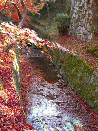f:id:toxandoria:20071206235632j:image