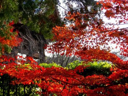 f:id:toxandoria:20071210215524j:image