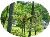 f:id:toxandoria:20080716224736j:image:right